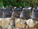 Walking boots airing on our dry stone walls after a day out on the fells!
