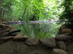 Natural Spring feed swimming pond
