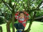 Climbing trees in our gardens!