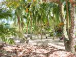 You can pick Pipas from the trees for fresh coconut water at Arrecife Beach.