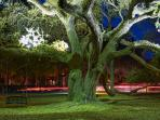 Live Oaks are abundant in Hilton Head and offer great shade in the hot summer