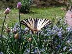 It's heaven for butterfly watchers