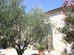 Olive trees in courtyard.