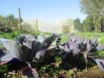 The farm production