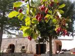 al Giardino di kama una varietà di frutti antichi, un giardino di biodiversità davvero speciale