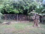 The enclosed back yard - you might be in time to get a julie mango from the neighbours tree
