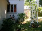 Garden in back yard