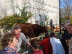 Issigeac - Maison de la Paix - 13th century medieval villa. Market Sunday - so festive!
