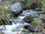 Backyard rushing creek