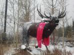 The Frisco Elk. Ready for Ski Season