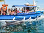 Take a boat trip to see Fungi the Dolphin in Dingle Bay. A Day Trip from the cottage.
