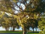 In front of BnB, a short walk to Lake Hume and the walking trail beside the Lake (winter to summer)