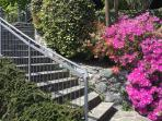 Azaleas bloom at the base of the stairs leading up to the BBQ terrace and carport parking space.