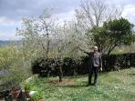 Roberto and the olive tree in the garden. Roberto e l'olivo in giardino