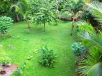 Very tranquil, secluded backyard full of iguanas, humming birds, exotic fruit trees and flowers!