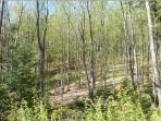 8 acres of forest, with a creek running along side the home