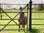 Mini the Shetland pony - she likes polo mints