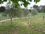 En una zona del jardín hay olivos y árboles frutales.