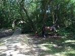 Another wild horse.