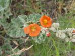 Local Wildflowers