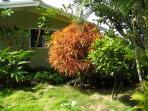 Garden between ohana studio and house (in background)