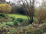 Daffodils and primroses in Spring
