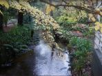 The creek during autumn