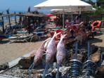 Fresh seafood lunches on the beach