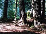 Sequoiatude, Redwood forest in Sonoma County