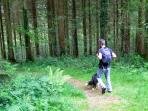 inviting forestry walks from the doorstep