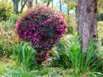 Flowers abound everywhere at Riverbend Byron Hinterland Retreat