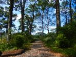 Stunning Walkways around the Homestead at Riverbend