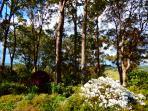 canopy of trees at Riverbend Byron Hinterland Retreat