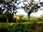 Roses Lush Plants and multitude of trees at Riverbend Byron Hinterland Retreat
