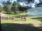 Horse riding around the lake
