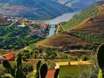 Región del Duero Vino