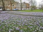 crocus display