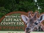 We love the Cape May Zoo. There's shade and it's big! Wear walking shoes. 10 min drive!