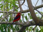 Excellent Birdwatching at Casa Tambor.