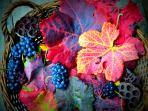 autunno colors