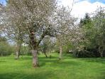 autre vue du jardin - 5000 m²