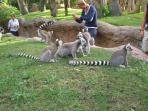 Zoo con habita natural para que los animales se encuentren en libertad, uno de los mejores del mundo