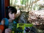 Zoo con separación de animales peligrosos por cristal o foso.