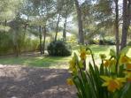 Le jardin #studioleslibellules