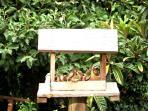 Our tremendous birdlife