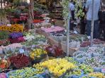 flower market at 5 minutes