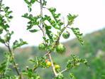 Esterni: vegetazione locale.