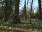 Balgreggan Woods , near Sandhead