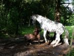 Unsere Pferde spielen im Paddock