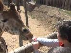 Murcia zoo